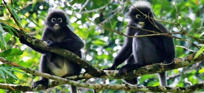 Monkeys in Khao Sok National Park